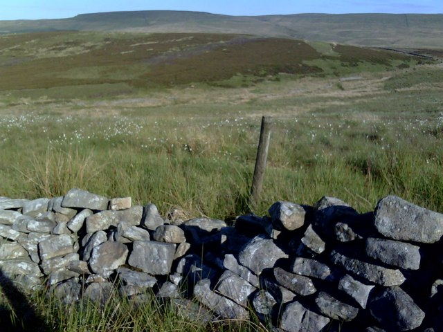 Dry  stone wall and cotton grass