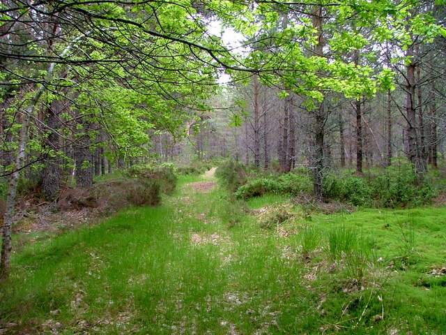 Woodland path in Glenmore forest