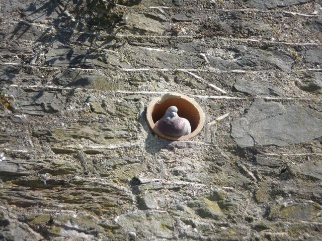 Brixham : Pigeon in a Hole