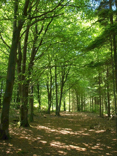 Stockhill Forest