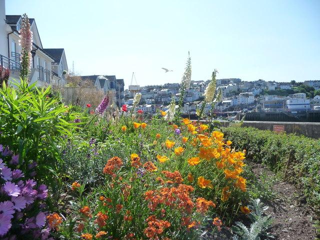 Brixham : Flowerbed