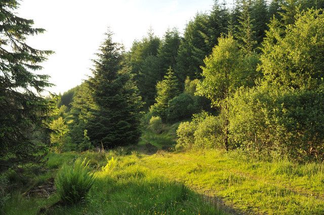 Overgrown forestry road near Barcaldine