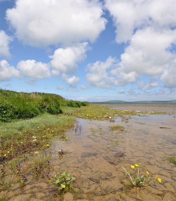 Loch Harray Marsh Marigold