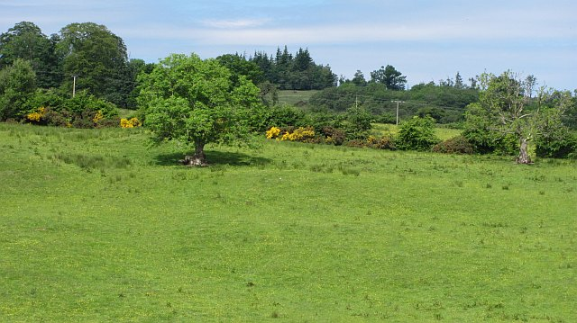 Grassland, Tullochan