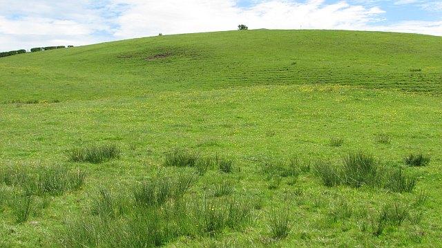 Grassland, Ballagan