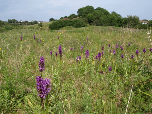 Orchids, Barton tip