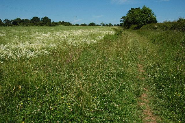 Bridleway to Knighton
