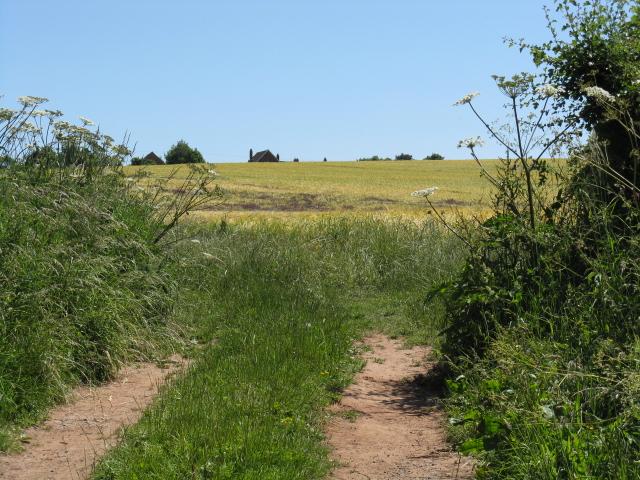 Through a field gate near Brook Farm