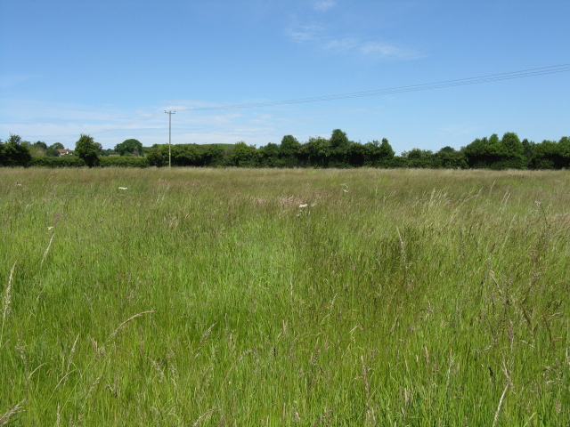 Grassland, Dunhampton