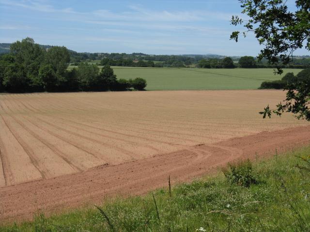 Fieldscape near Lineholt Common