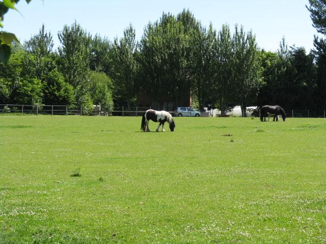 Horses grazing near The Riddings