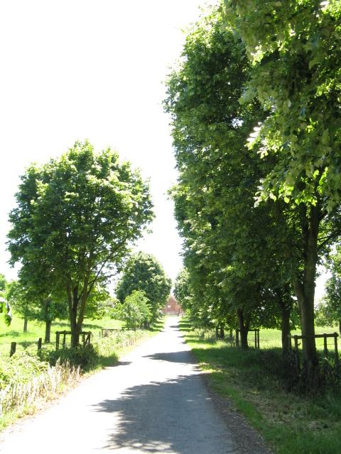 Avenue of trees, Valley Farm