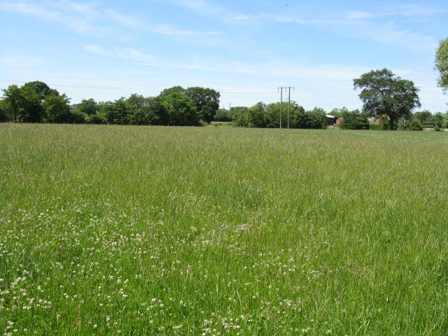 Grassland, Sneads Green
