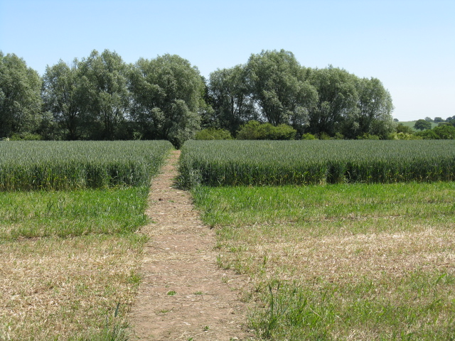Footpath through the crops, Doverdale