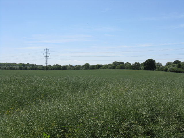 Fields off the access to Doverdale Mill