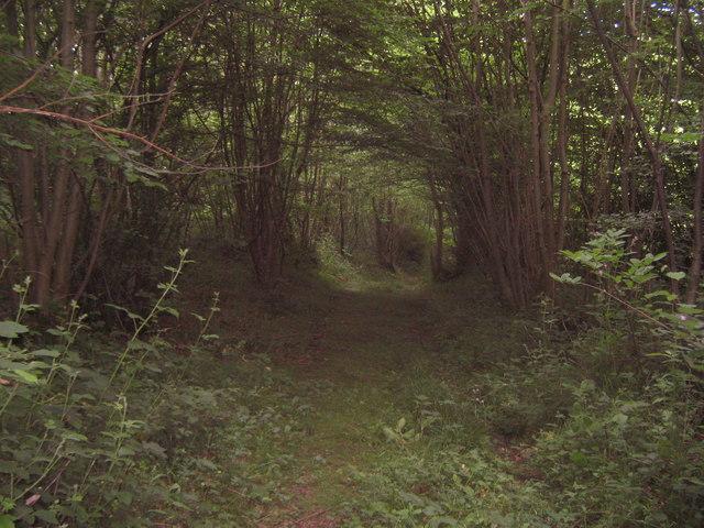 Footpath in Park Wood