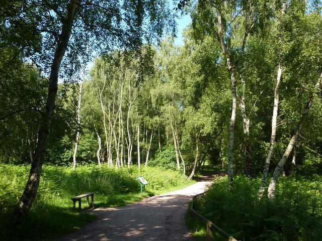 Forest footpath towards the Major Oak