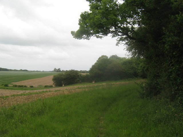 Bridleway beside Doves Wood