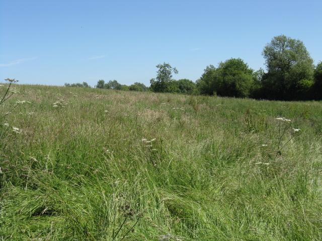 Fields by the railway