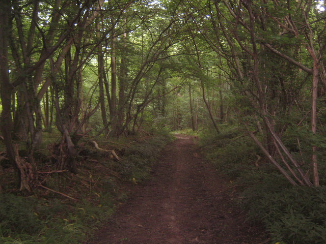 Bridleway in Bavinge Wood