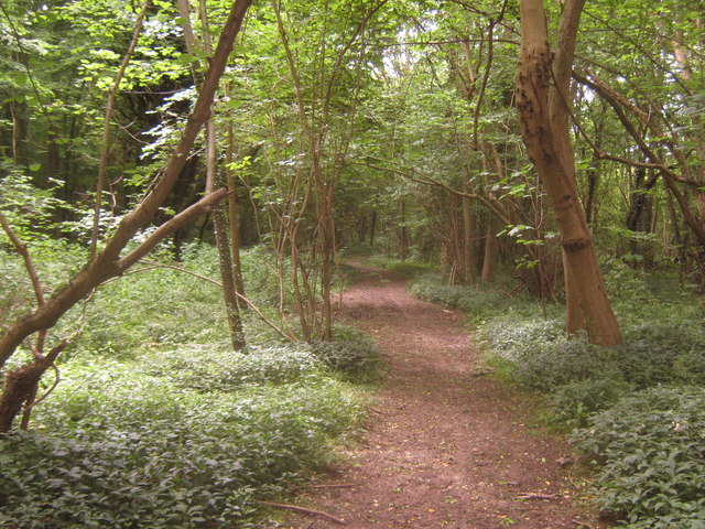 Bridleway in Bavinge Wood