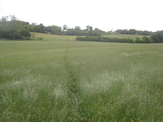 Footpath towards to Whiteacre Farm
