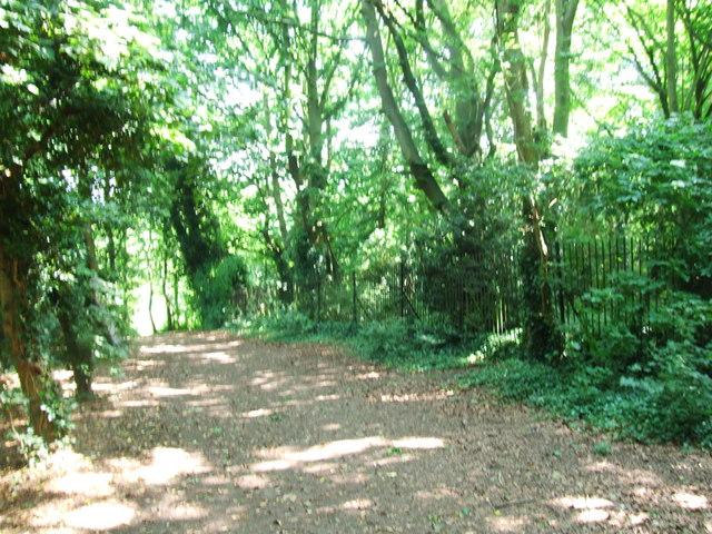 Woods behind Foord Almshouses, Rochester
