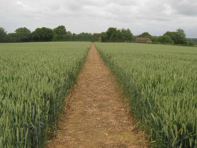 Footpath towards Beech Tree Farm, Hill Street