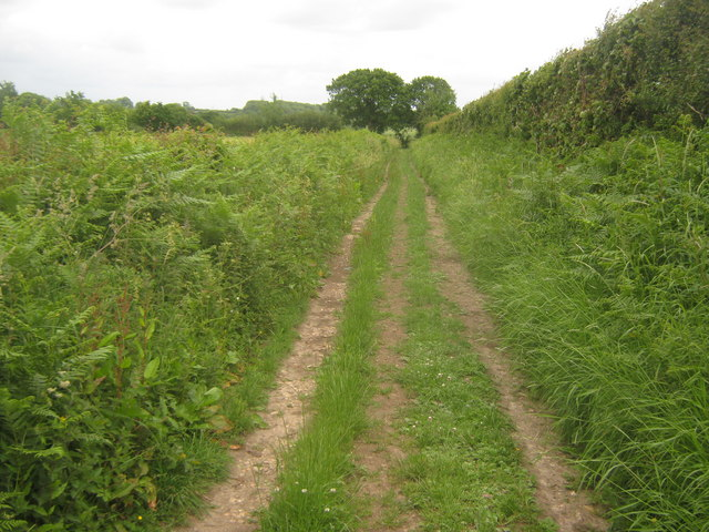 Track to Spong Wood