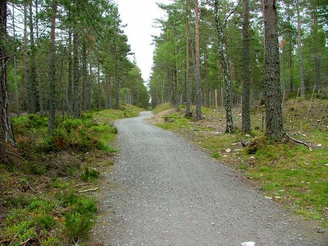 Cycle path near Coylumbridge