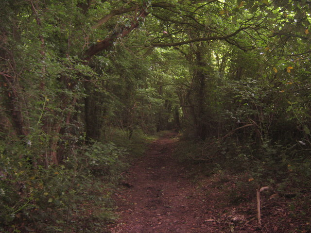 Woodland Path in Spong Wood