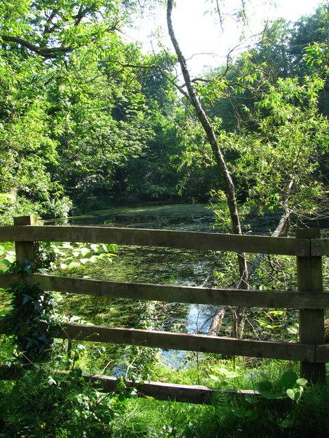 Allt-yr-yn Nature Reserve Pond