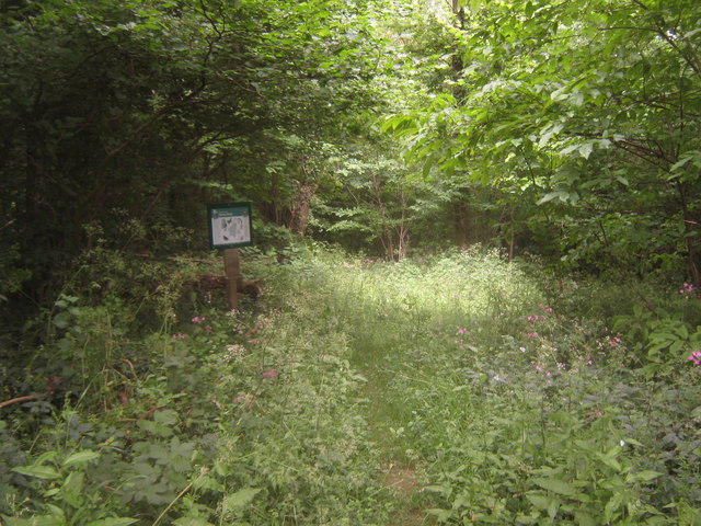 Lesser used entrance to Spong woodland path
