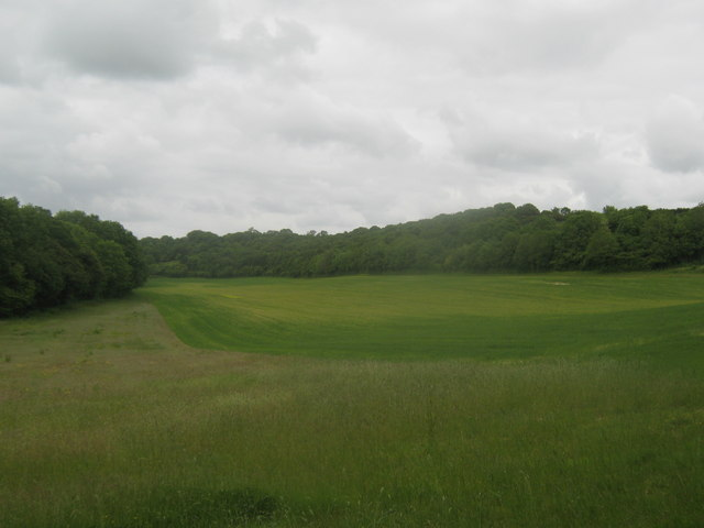 Field between two woods