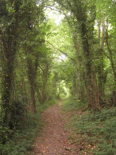 Bridleway in Edards Wood