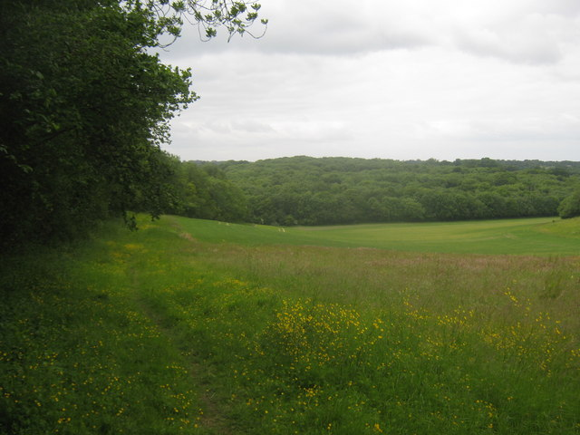 Footpath towards Edards Wood