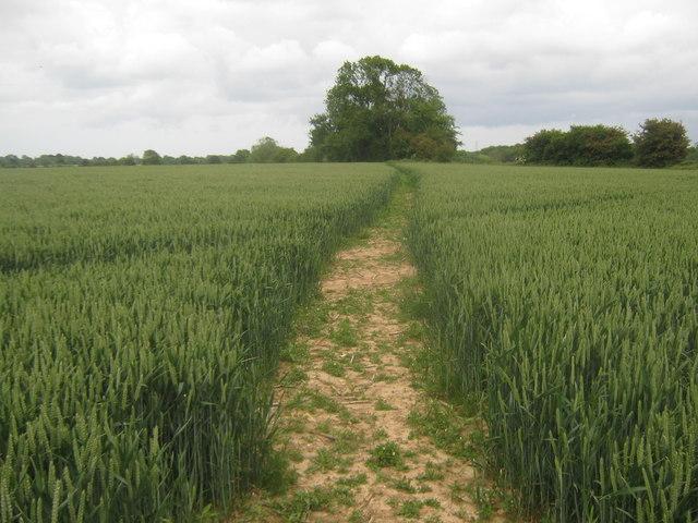Footpath towards Stelling Minnis