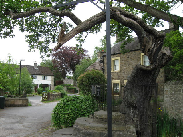 Medieval steps and ancient oak, Caton