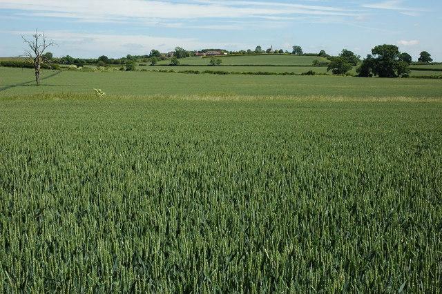 Arable land at Weethley