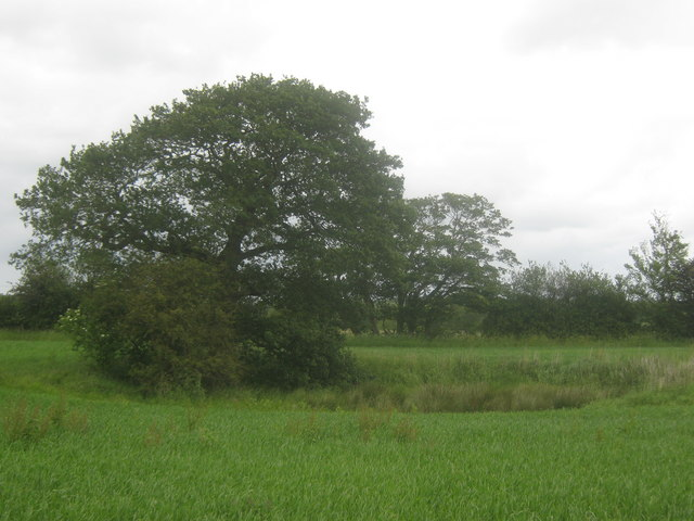 Pond in a field