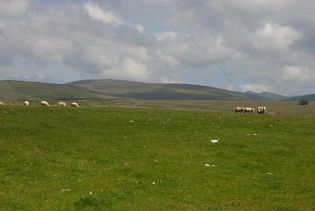 Grazing near Pant Gwyn