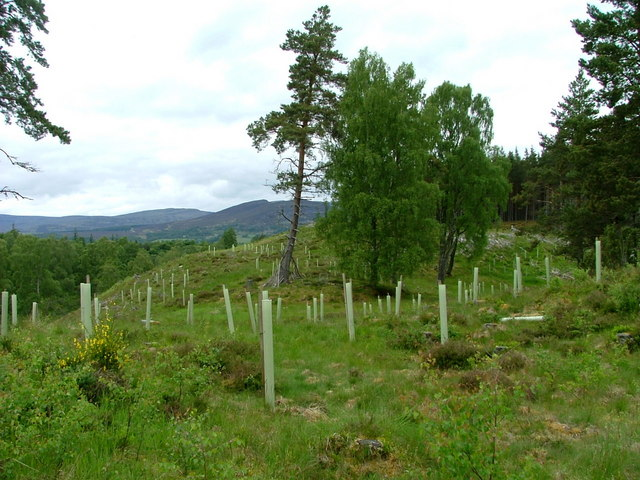 New planting at Feshiebridge