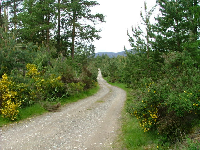 Road into Moor of Feshie forest