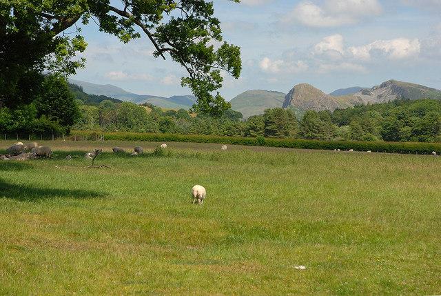 Field east of Llanegryn