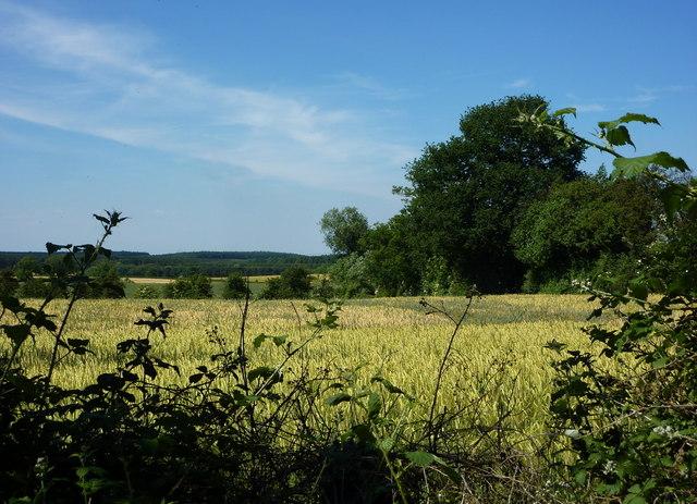 Fields north of Bothamsall
