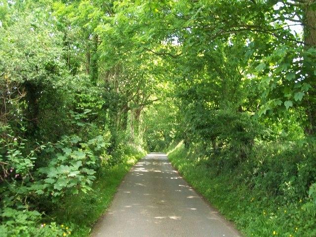 Leafy lane east of Efailnewydd