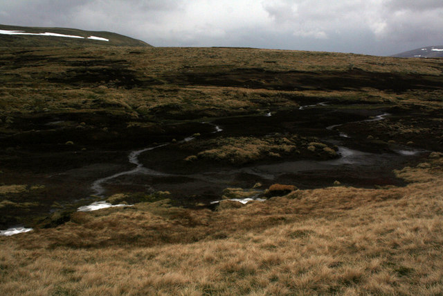 Evil-looking bog