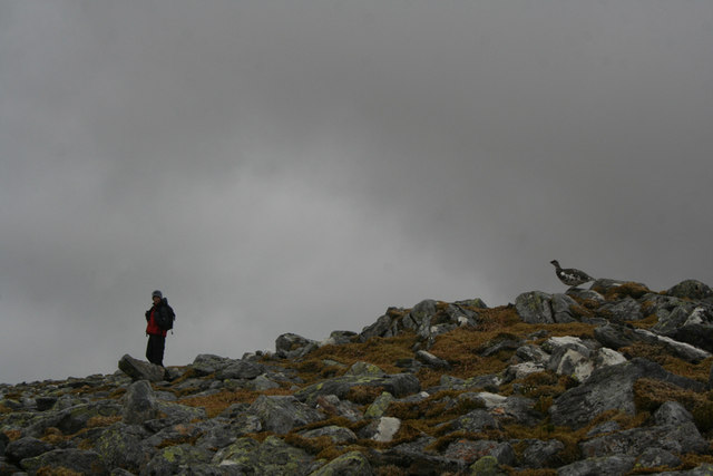 Boy and ptarmigan