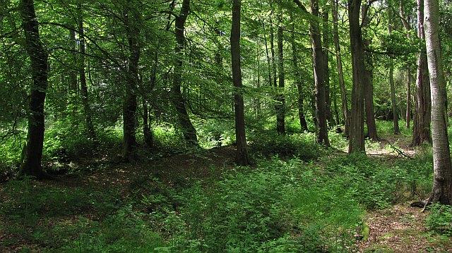 Moss o' Balloch Plantations
