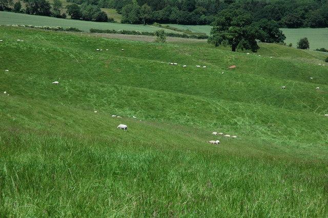 Undulating farmland, Weethley